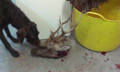 mucka with A 6 point sika head