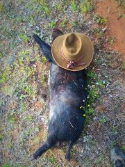 Another young boar