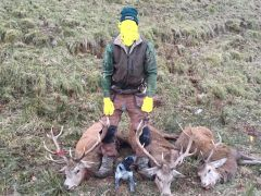 griffs Pup And 3 stags doctored image