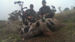 2nd pig with my Creed