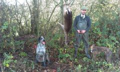 craig And The dogs with A Big fallow Doe