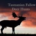 Tasmanian Fallow Deer Hunt